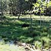 Moose feeding in field