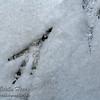 Magpie Track