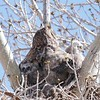 Three Owlets are Visible.  The middle one provided me with a rather unflattering view.