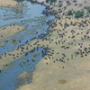 Herds of buffalo from the air