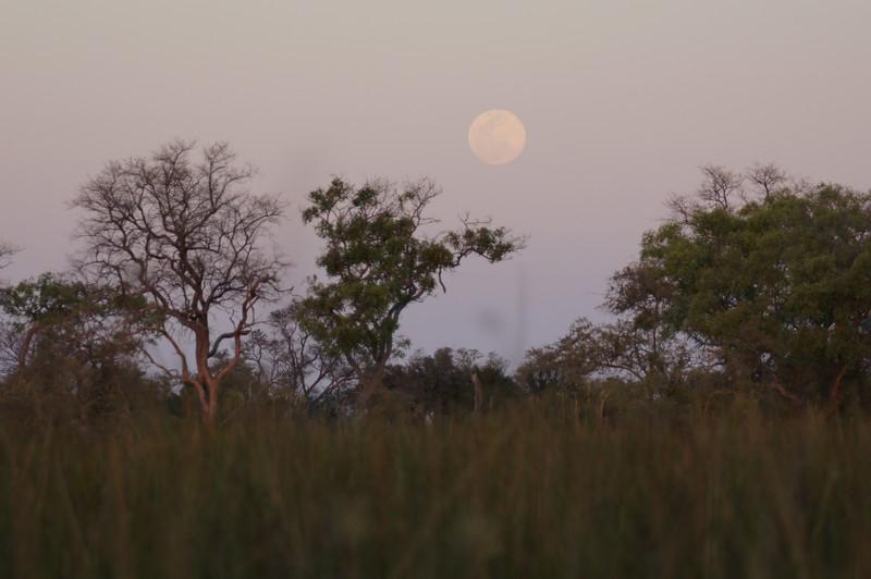 African moon