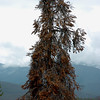 Osprey nest in tree. This is as close to the nest as I could be. Shot using 70mm focal length. Colorado August 2007