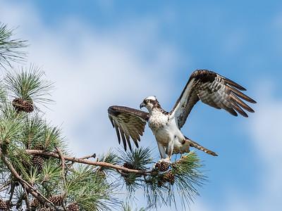 Virginia-Birds-June-20177400