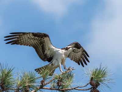 Virginia-Birds-June-20177317