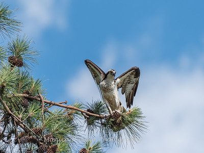 Virginia-Birds-June-20177405