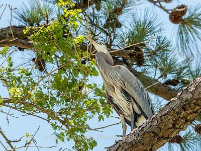 Virginia-Birds-June-20177269