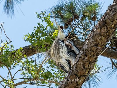 Virginia-Birds-June-20177286