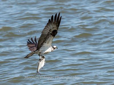 Virginia-Birds-June-20177383