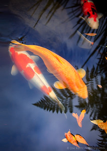 Koi in the Sky