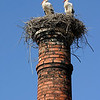Storks, Silves, Portugal