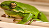 """Frogmore the Tree Frog""<br /> Frogmore, SC"