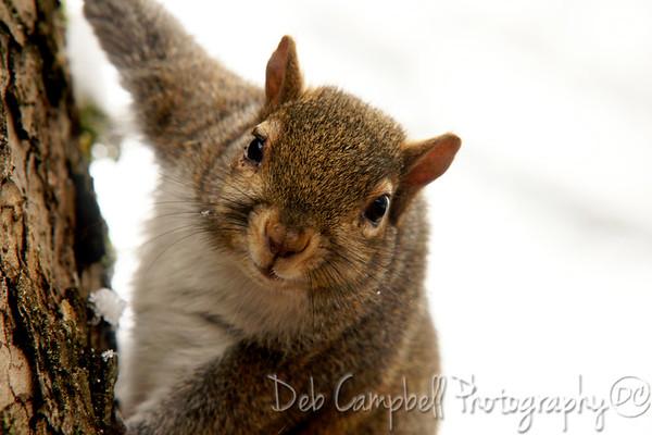 Squirrels, Chipmunks and Shrew