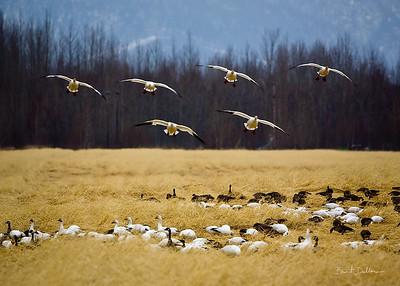 Squadron Landing