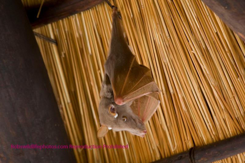 Close up of a single bat