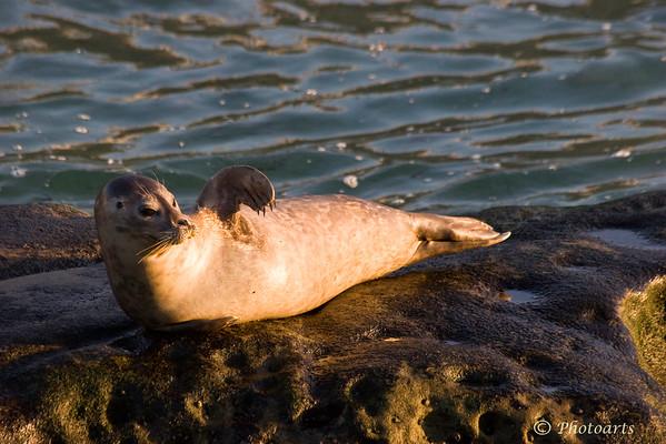"""Bye Bye Seal!"""