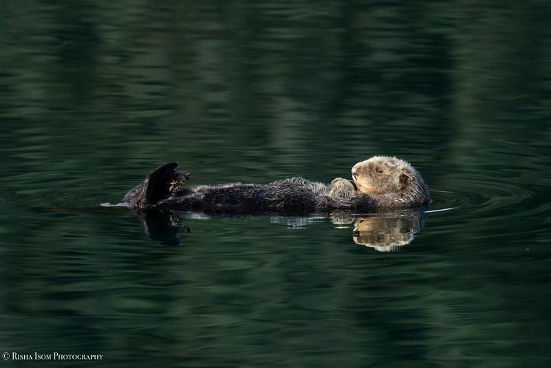 Otter Aspen Glow