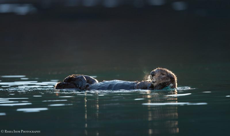 The Limelight- Kodiak Alaska