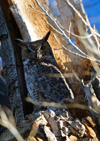 owls april 2009