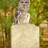 A park ranger gave directions to a long forgotten cemetery lost in the forest.  He told of a resident owl living peacefully in a tree nearby.  It was a haunting place with old tombstones overgrown with vines.  While waiting in the quiet woods, one's mind wonders about those buried there and that I must leave before dark.