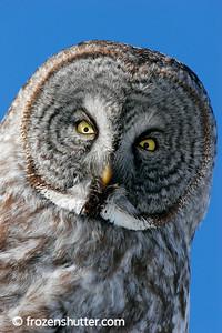 Owlfully Close