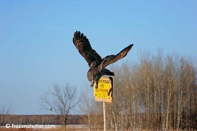 Owl Launch