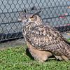 Owls-12 Nov 2016-5780