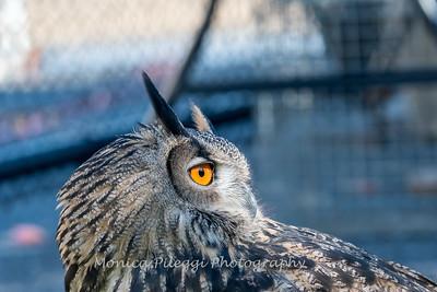 Owls-12 Nov 2016-5676