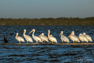The White Pelican Bar