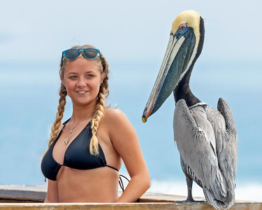 Brown Pelican and Girl