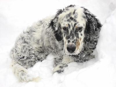 Snow 1206-40