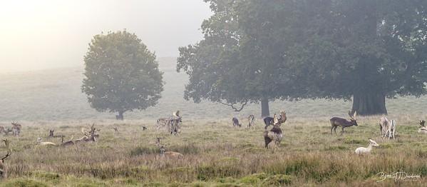 Deer in the morning mist.