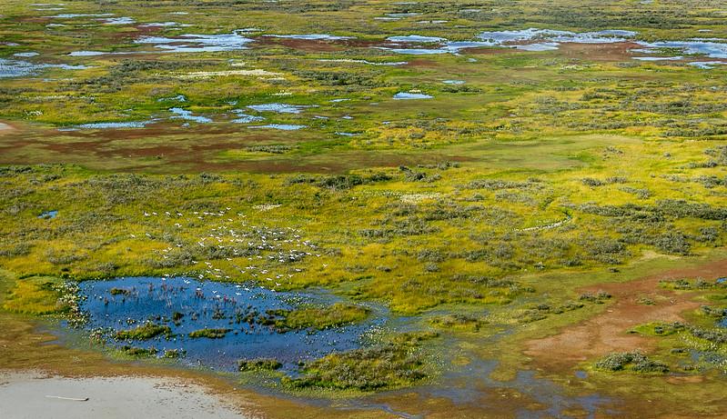 Aerial view of  birds in flight at Hudson Bay