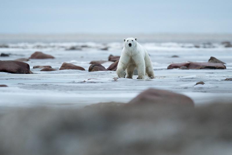 Dancing on shore ice