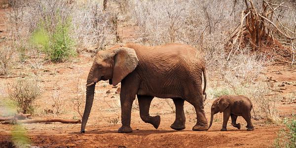 Elephant Mini-Me