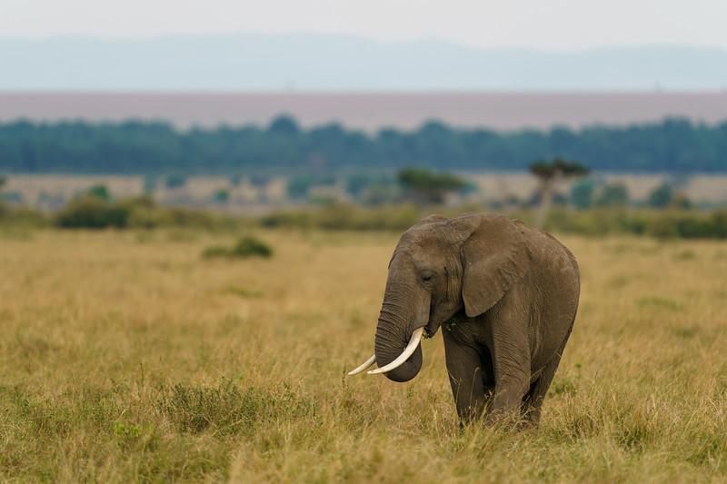 Mara Elephant