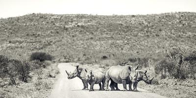 Rhino Road Block