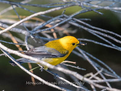 Prothonotary June 2018-9404