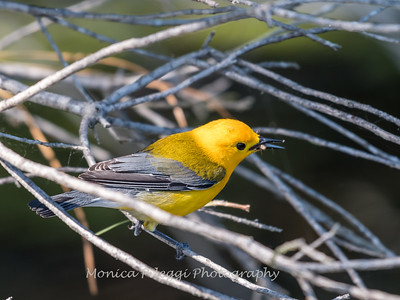 Prothonotary June 2018-9405
