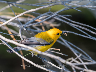 Prothonotary June 2018-9403