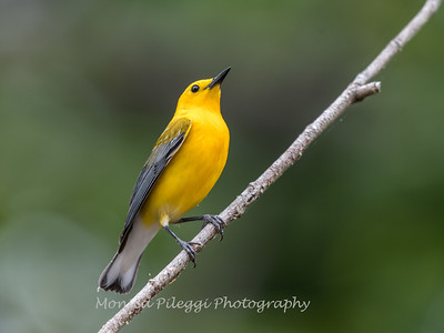Prothonotary June 2018-8475