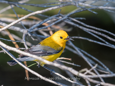 Prothonotary June 2018-9406
