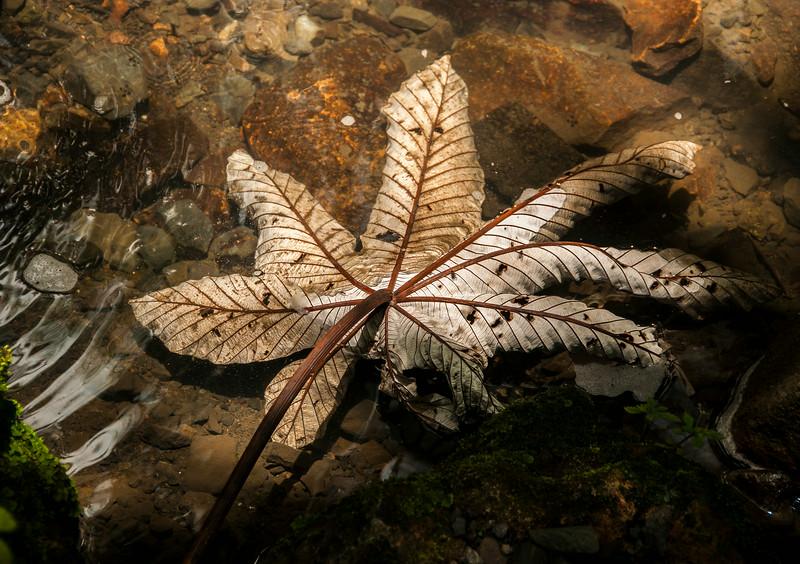 Puerto Rico 2013 - Rainforest Tour