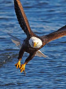 Eagles 1 360 edit 3