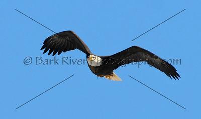 Eagles 1 058 edit