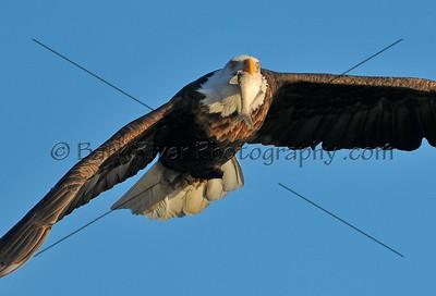Eagles 2 179 edit