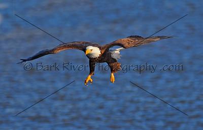 Eagles 1 352 edit 2