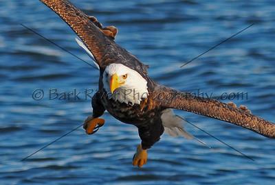 Eagles 1 357 edit 3