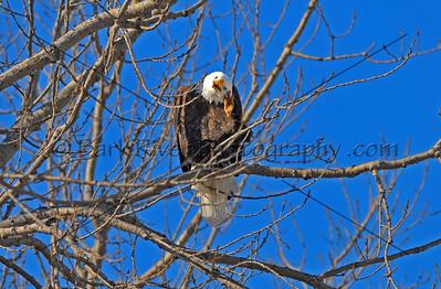 Eagles 1 275 edit 2