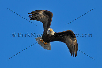 Eagles 2 129 edit
