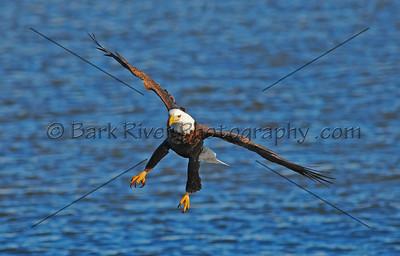Eagles 1 353 edit 2